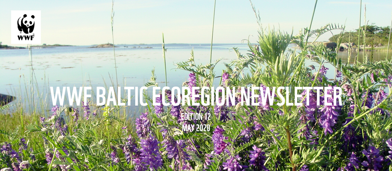 GRASS project in the WWF Baltic Ecoregion Programme Newsletter