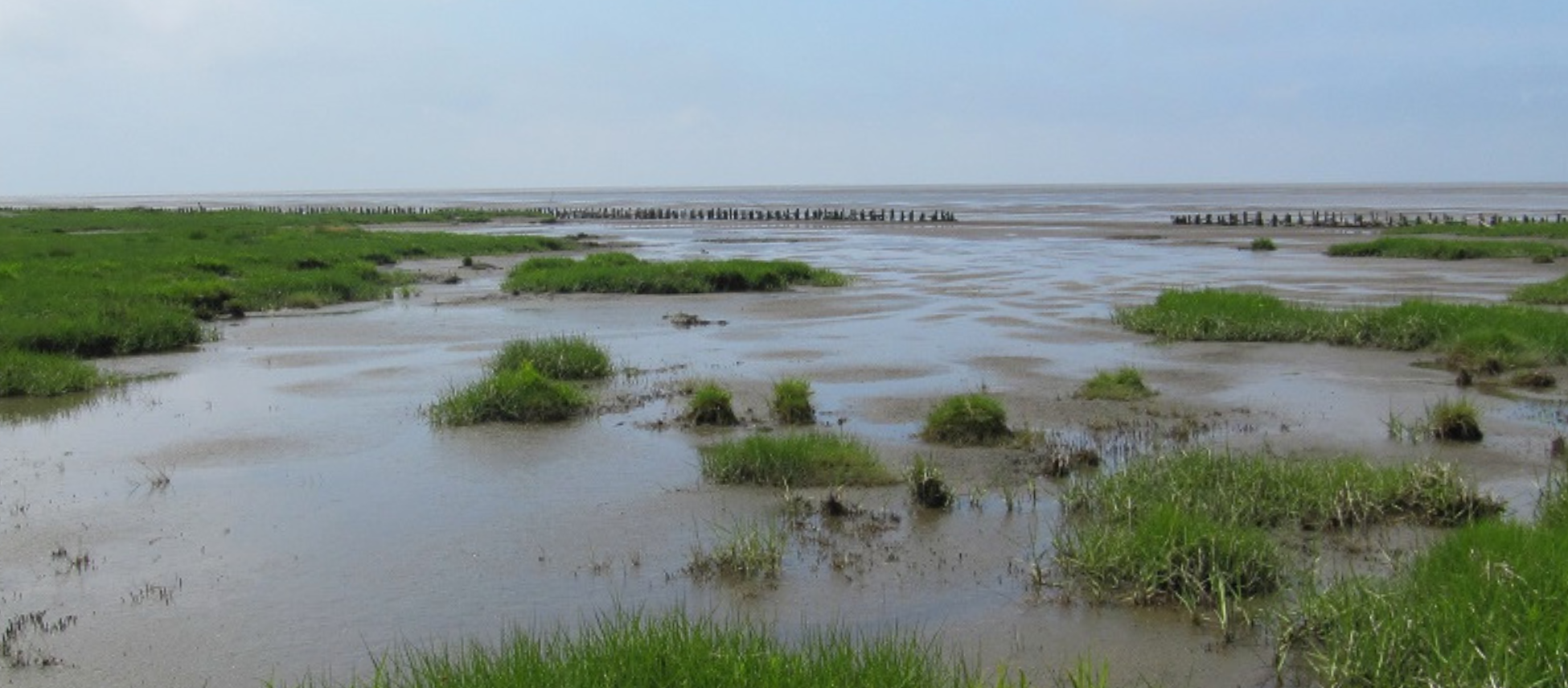 Interdisciplinary Postdoc Position in Salt Marsh Ecology and Ecosystem Services