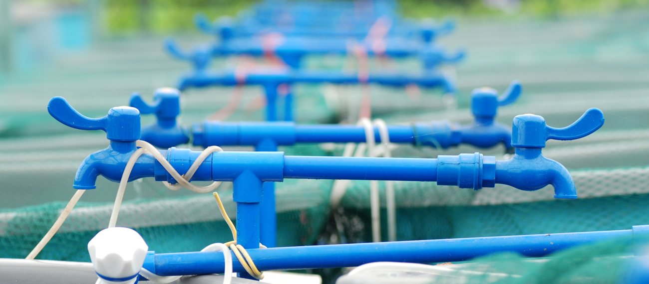 New project to boost aquaculture technology development