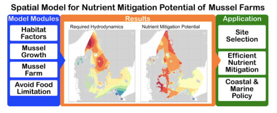 New article on mussel farming as nutrient mitigation