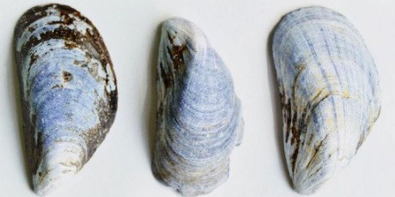 Biome: Baltic Sea mollusk shells for bone tissue engineering